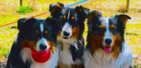 Dogs group shot